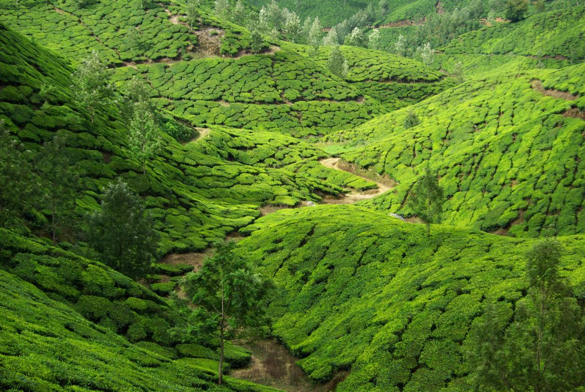 Landscapes, India